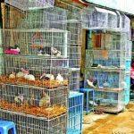 কাটাবন মার্কেটের মাছ ও পশু-পাখির জীবন রক্ষার উদ্যোগ